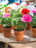 Les usines de Basil avec les fleurs de papier et les poèmes se sont vendues sur St Anthony Photos stock