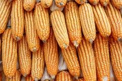 Les usines de maïs des agriculteurs lancent sur le marché Photographie stock libre de droits