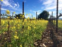 Les usines de moutarde fournissent la couverture pour des vignes photo libre de droits