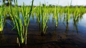 Les usines de riz se d?veloppent en Asie images stock