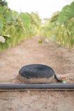 Les usines de Tora cultivent avec le tuyau de l'eau étendu au sol images stock