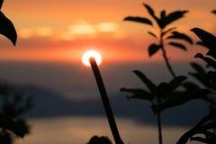 Les usines silhouettent pendant le coucher du soleil Images libres de droits