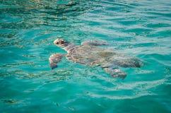 Les vacances d'été de Zakynthos décrivent l'inspiration pendant des vacances sur l'île Image stock