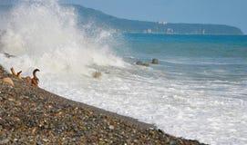 Les vagues de la mer Photo libre de droits