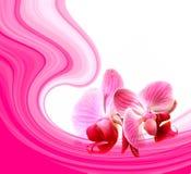 Les Valentines abrègent avec des fleurs Image stock