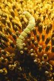 Les vers mangent le pollen de tournesol Photographie stock