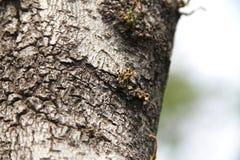 Les vieilles racines d'arbre vivantes images stock