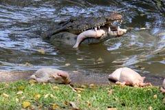 Les vies de crocodile dans la crèche Images stock