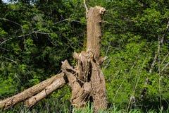 Les vies de tronçon d'arbre dessus Photo libre de droits