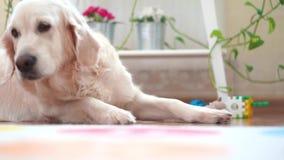 Les vies heureuses du beau grand chien d'animaux familiers à la maison - se reposant dans la chambre banque de vidéos