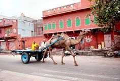 les vieux couples dans des vêtements nationaux se reposent sur le chariot de chameau Photographie stock libre de droits