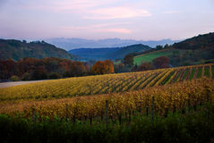 Les vignes s'approchent des Pyrénées. Image libre de droits