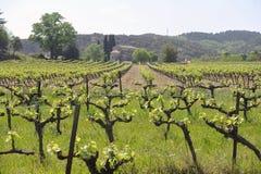 Les vignobles au printemps Images libres de droits
