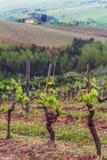 Les vignobles du chianti photographie stock