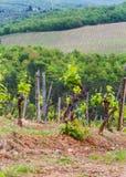 Les vignobles du chianti photographie stock libre de droits