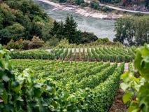 Les vignobles le long du Rheinsteig traînent en Allemagne par le Rhin Riv image libre de droits