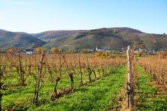 Les vignobles s'approchent de Wintrich sur la Moselle Photos stock