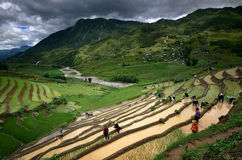 Les villageois travaillant dans les terrasses de riz s'approchent de Sapa Images libres de droits