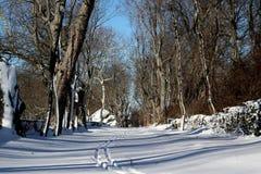 Les voies de ski sur la neige ont couvert le chemin Image libre de droits