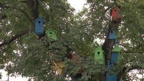 Les volières Cabane dans un arbre en bois colorée d'oiseau clips vidéos