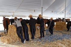 Les volontaires amish tendent des chevaux à vendre Photos libres de droits