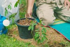 Les volontaires disposent à planter des arbres images libres de droits