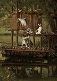 Les voyageurs de lémurs Photographie stock libre de droits