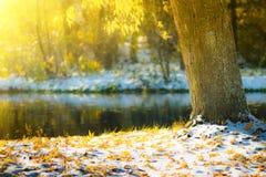 Les vues de l'automne se garent avec les feuilles jaunes sur la neige dans les rayons du soleil et le pont de rivière Photographie stock