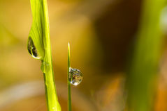 Les waterdrops Photographie stock libre de droits