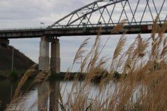Les Wildflowers aménagent la rivière en parc heureuse de mer photographie stock libre de droits