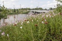 Les Wildflowers dans le premier plan ont inondé l'espace vert et l'horizon de l'OK de Tulsa brouillé à l'arrière-plan et les voit images libres de droits