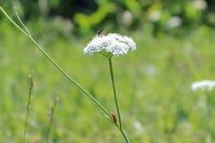 Les Wildflowers de nature jaillissent photo stock