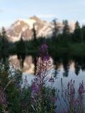 Les Wildflowers près montent Shuksan et décrivent le lac photo libre de droits