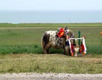 Les yaks blancs Image libre de droits