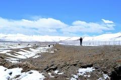 Les yaks dans le beau paysage avec la neige ont couvert des montagnes à la route de Karakorum dans le Xinjiang, Chine photographie stock libre de droits