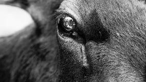 Les yeux de cerfs communs aiment un miroir photos libres de droits