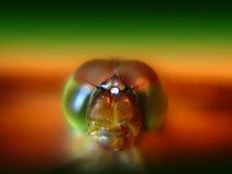Les yeux de la libellule Photos stock