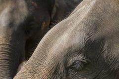 Les yeux des éléphants Photographie stock libre de droits