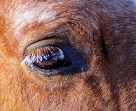 Les yeux du cheval Photographie stock libre de droits