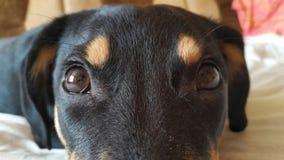 les yeux du chien sont CU Images stock