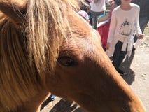 Les yeux du poney photos stock