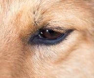 Les yeux du ` s de chien Macro Photo libre de droits