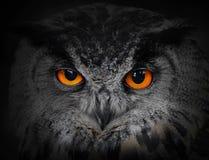Les yeux mauvais. image libre de droits