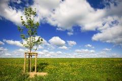 Les zones d'herbe avec le jeune arbre opacifie dans le ciel photographie stock libre de droits