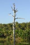 Les zones humides de la Floride Images stock