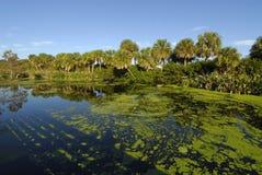 Les zones humides de la Floride Images libres de droits