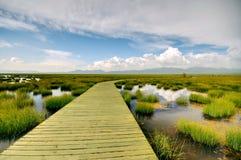 Les zones humides de la route de planche Photo libre de droits