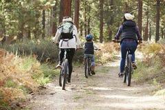 Lesbiska par och dotter som cyklar i en skog, baksidasikt royaltyfri foto