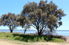 Leschenault Estuary Bunbury West Aust stock photography