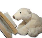 Lesen des teedy Bären Stockfotografie